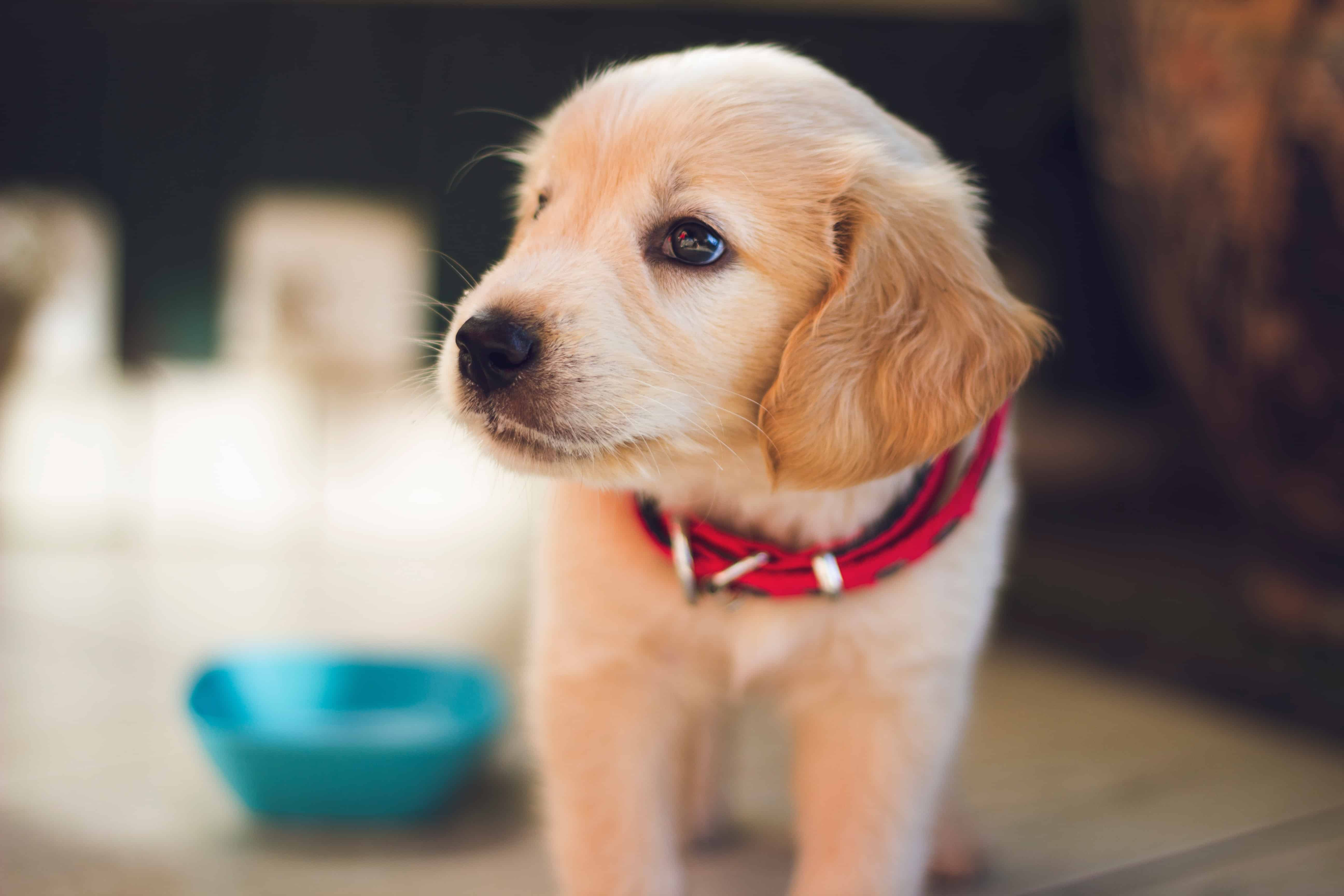 How Do I Include My Pet in My Estate Plan?
