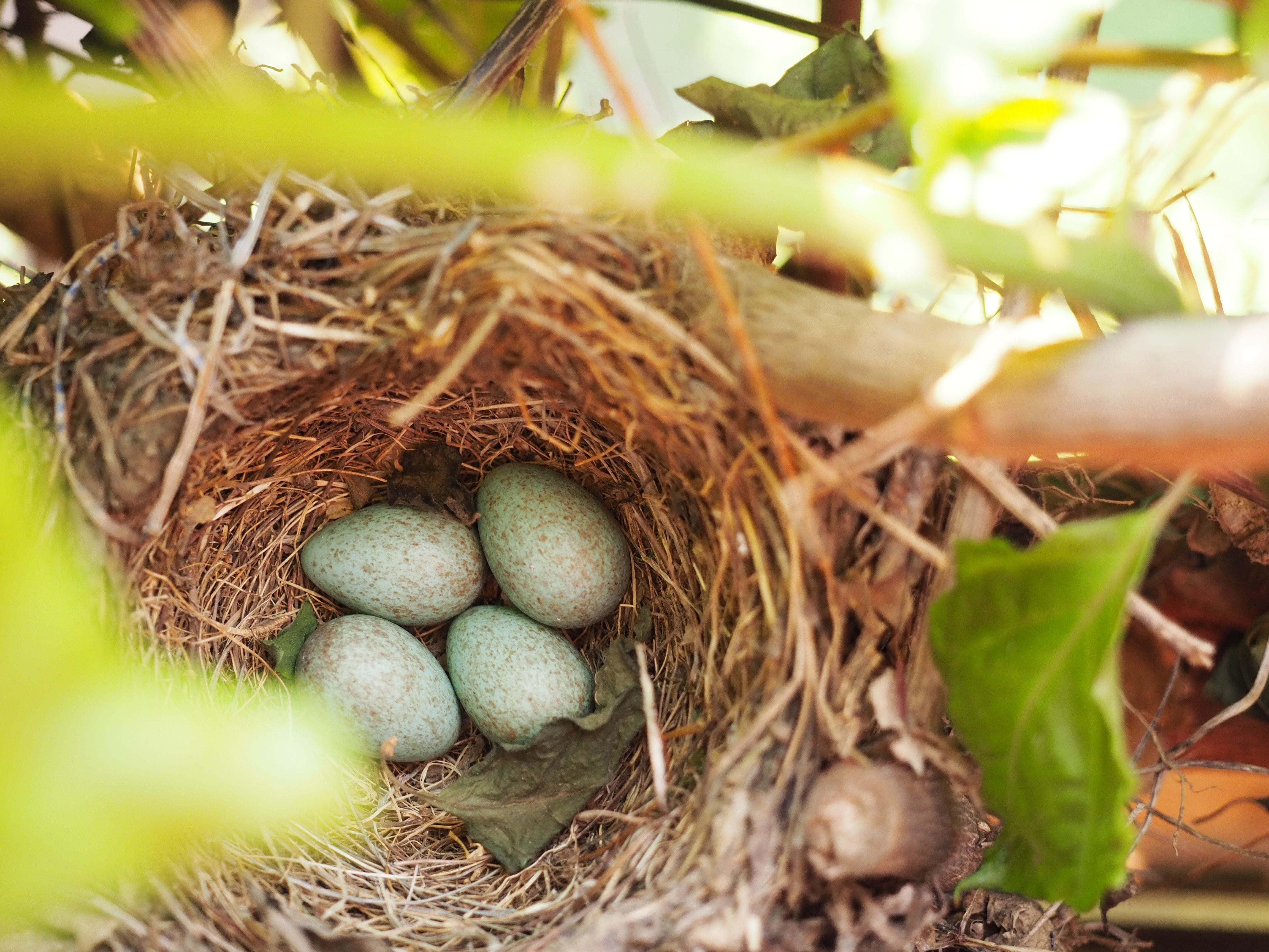 Empty Nest? Time to Focus on the Nest Egg