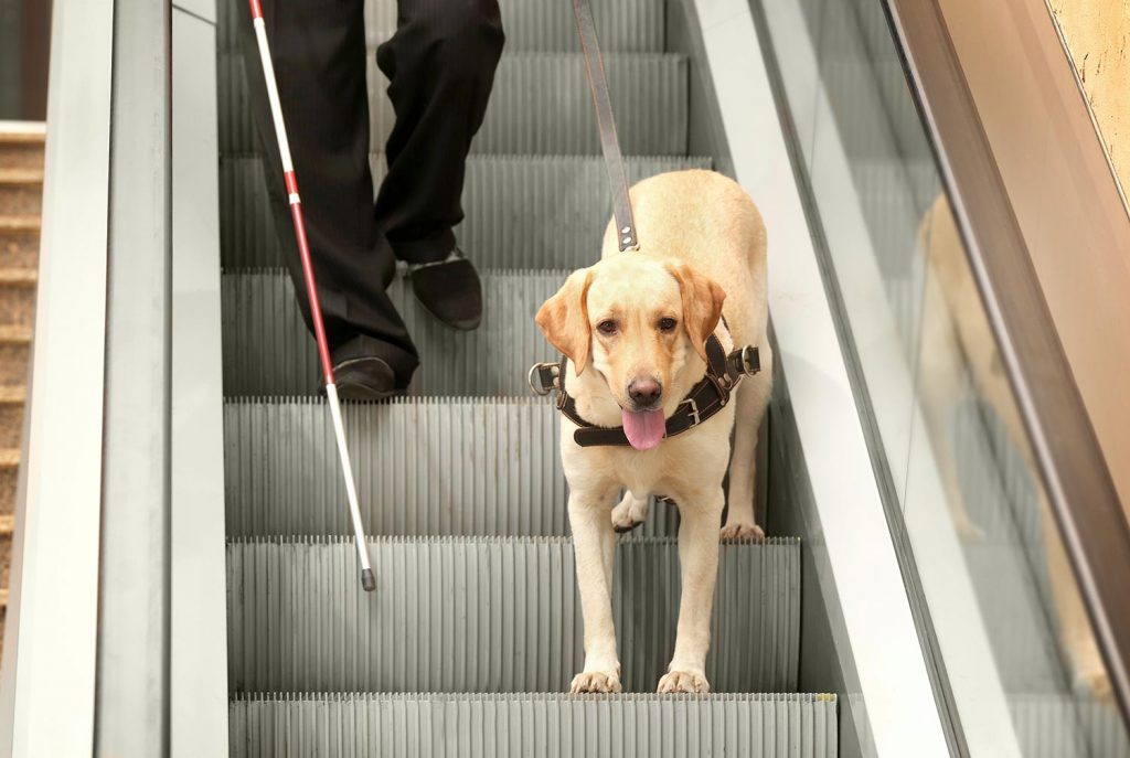 service animals and airlines